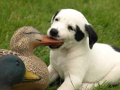 Duck Hunter Original by James Peterson