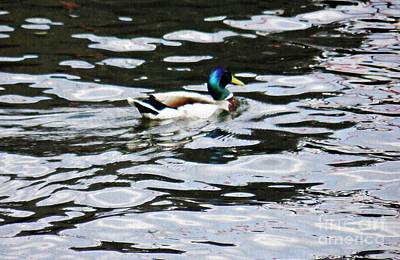 Wild Duck Photograph - Duck In The Water by Sarah Loft