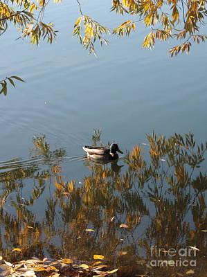 Duck On Golden Pond Print by Carol Groenen