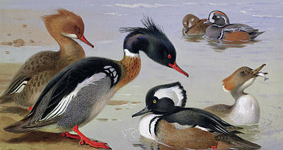 Ducks By A Lake Print by Archibald Thorburn
