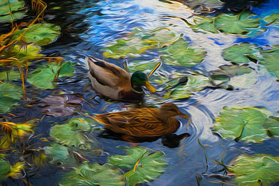 Ducks In Lily Pond Print by Lilia D