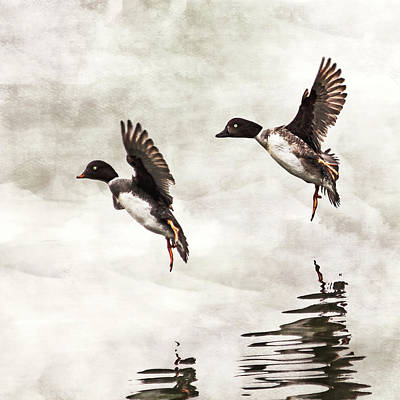 Two Ducks In Flight Photograph - Ducks Landing On The Lake by Peggy Collins