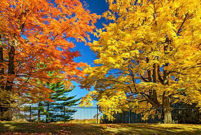 Fall Photograph - Dueling Maples 2 by Steve Harrington
