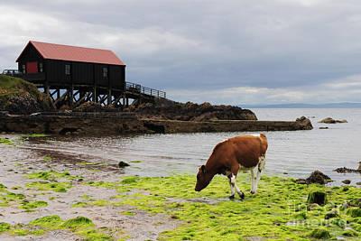 Mulling Photograph - Dunaverty Bay Boathouse by Stephen Smith