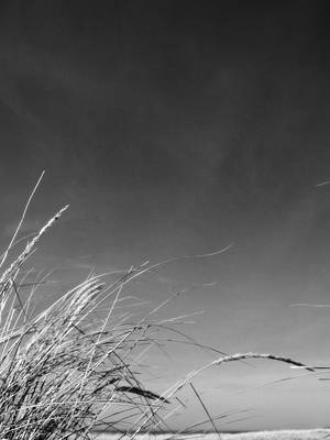 Dune Grass With Sky Print by Michelle Calkins