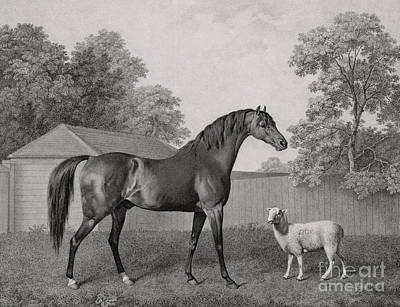 Rural Scenes Drawing - Dungannon by George Stubbs