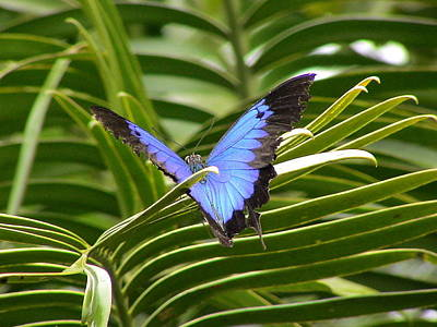 Dunk Island Digital Art - Dunk Butterfly Resting by D Scott Fern