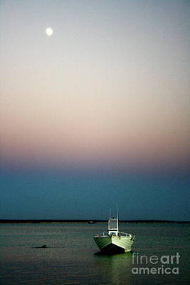 Monkey Mia Photograph - Dusk And Dolphin by Caroline Walker