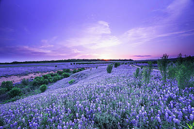 Flower Photograph - Dusk At A Bluebonnet Field  by Ellie Teramoto