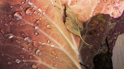 Autumn Photograph - Dying For Winter by Ron Day