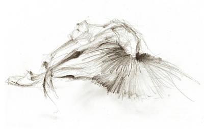 Ballet Drawing - Dying Swan Or Ballerina In White Tutu by Lousine Hogtanian
