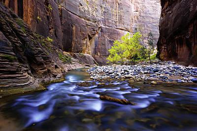Autumn Photograph - Dynamic Zion by Chad Dutson