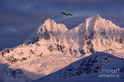 Eagle And Mountains Print by John Hyde - Printscapes