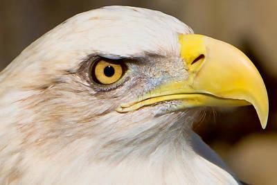 Eagle Digital Art - Eagle Eye by William Jobes