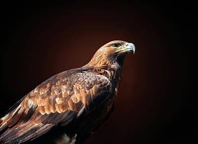 Eagle Original by Ivan Vukelic