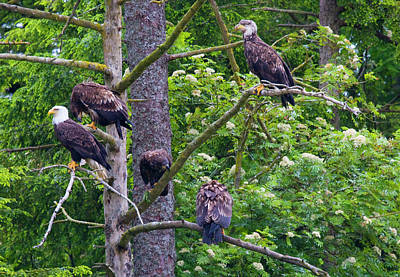 Gathered Photograph - Eagle Tree by Mike  Dawson