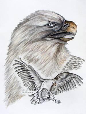 Buzzard Drawing - Eagles  by Barbara Cleveland