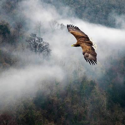 Eagles Dare Print by Ian David Soar