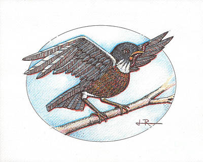 Bird And Worm Drawing - Early Bird, Alighting by Jim Rehlin
