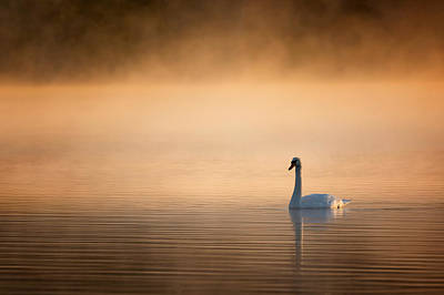 Serene Photograph - Early Bird 2015 by Bill Wakeley