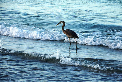 Early Morning Heron Beach Walk Print by Debbie Oppermann