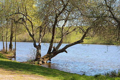Sutton Photograph - Early Spring At The Lake by Rumyana Whitcher