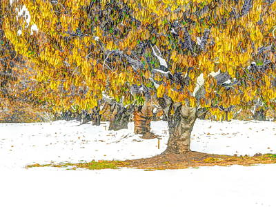 Early Winter In The Cherry Orchard Print by   FLJohnson Photography