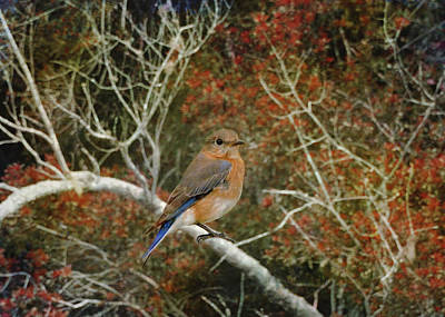 Red Photograph - Eastern Bluebird In Colorful Brush by Carla Parris