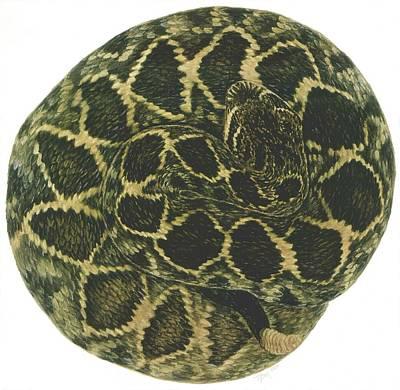 Eastern Diamondback Rattlesnake Original by Tim McCarthy
