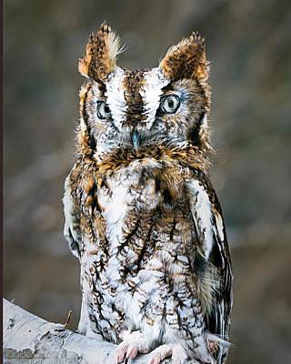 Eastern Screech Owl Nature Wear Print by LeeAnn McLaneGoetz McLaneGoetzStudioLLCcom