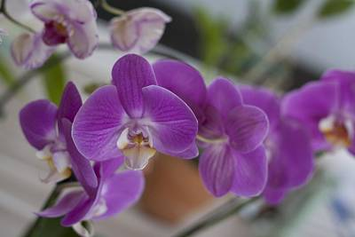 Eat More Orchids Print by Kevin  Sherf