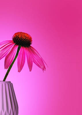 Pink Photograph - Ecinacea Pink by Mark Rogan