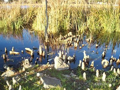 Bald Cypress Stump Photograph - Edge Of The Swamp by Seaux-N-Seau Soileau