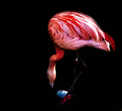 Flamingos Photograph - Egg Rolling Flamingo by Martin Newman