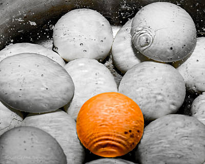 Surreal Photograph - Eggs Abstract by Erich Grant