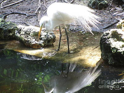 Egret And Self Original by Sharon Nelson-Bianco