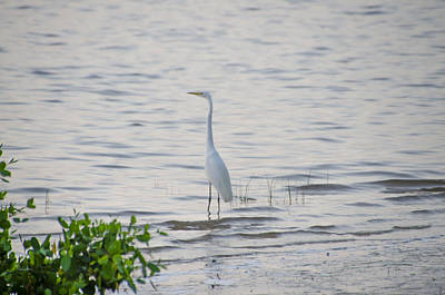 Egret Photograph - Egret At Crystal Beach Florida by Bill Cannon
