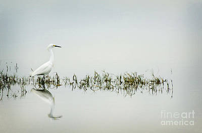 Egret Print by Jim  Calarese
