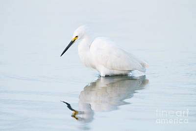 Egret Photograph - Egret On Blue by Ruth Jolly