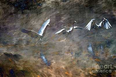 Brinton Photograph - Egrets by Judy Wolinsky