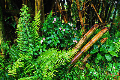 El Yunque National Forest Ferns Impatiens Bamboo Mirror Image Print by Thomas R Fletcher