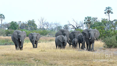 Photograph - Elephant Family Tom Wurl by Tom Wurl