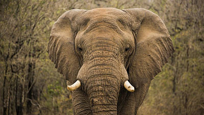 Charging Photograph - Elephant Watching by Stephen Stookey