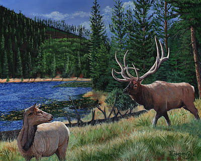 Beaver Painting - Elk At Beaver Lake  Yellowstone by Timithy L Gordon