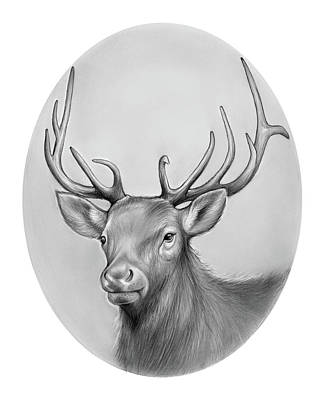 Deer Drawing - Elk by Greg Joens