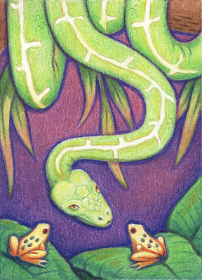 Rainforest Drawing - Emerald Tree Boa by Amy S Turner