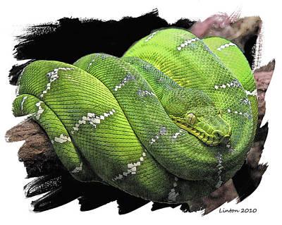 Boa Constrictor Digital Art - Emerald Tree Boa by Larry Linton