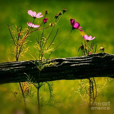 Square Flower Photograph - Emerging Beauties - 11spv2sq by Variance Collections