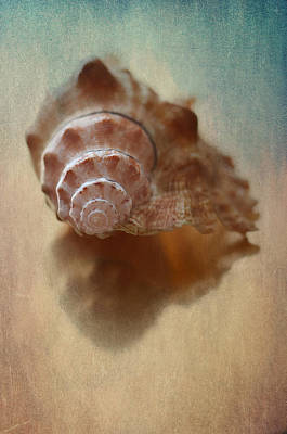 Sea Shell Fine Art Photograph - Empty Nest by Maggie Terlecki