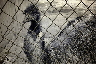 Emu Photograph - Emu At The Zoo by Luke Moore